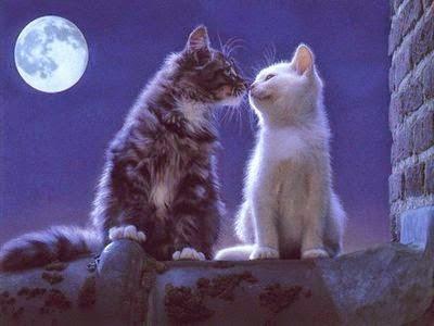Message pour Souhaiter bonne nuit à son amour