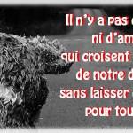 Image Damour De Tristesse Image De